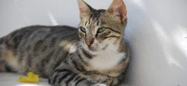 Полисорб для кошек: зачем сорбент питомцу?