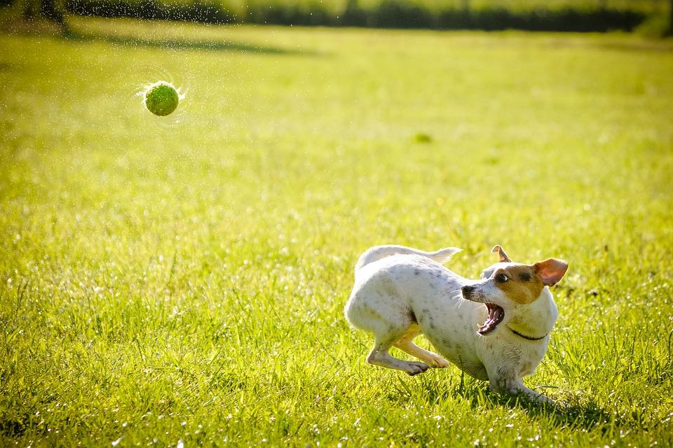 Полисорб при пищевом отравлении у собак